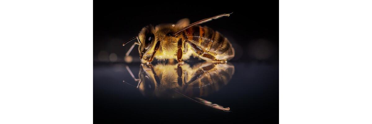 Bienengift / Bienenstich - Hilfe aus der Natur - Bienengift - Hilfe aus der Natur