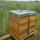 Echte Bienenpatenschaft – klassische Art, den Schutz der...
